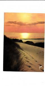 BF16461 coucher de soleil dans les dunes france front/back image