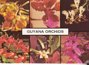 Guyana Orchids - Posted 1981