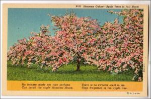 Blossoms Galore, Apple Trees