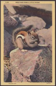 Greetings From a Little Friend,Chipmunk Postcard