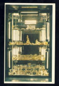 Carson City, Nevada/NV  Postcard, The Nugget Bar & Casino Gold Specimens