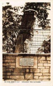 Australia Katoomba Explorers' Tree real photo Postcards