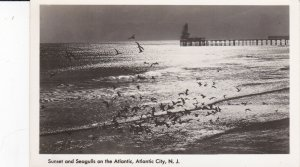 RP: ATLANTIC CITY , New Jersey , 1940s , Sunset and Seagulls on the Atlantic