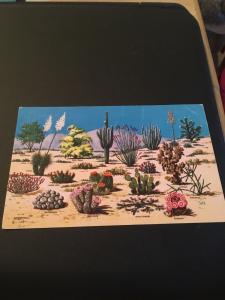 Vtg Postcard: Cacti And Desert flora of the Great Southwest