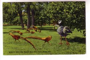 Beauty and the Beast, Rare Bird Farm, Miami, Florida, CR Adamson