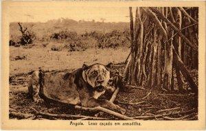 PC CPA ANGOLA / PORTUGAL, LEAO CACADO EM ARMADILHA, Vintage Postcard (b21627)