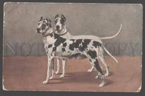 098364 Two Marble GREAT DANE Dogs Vintage postcard