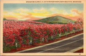 Cumberland MD -  WESTERN MARYLAND - SPRINGTIME US 40 MOUNTAINS - Postcard