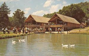 Harrison Arkansas Trout Fishing Bluff Spring Vintage Postcard K90904