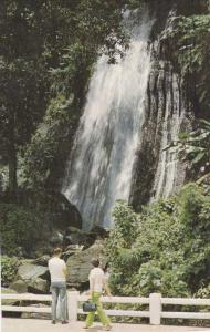 Waterfall in El Yunque Rain Forest - Puerto Rico - pm 1971