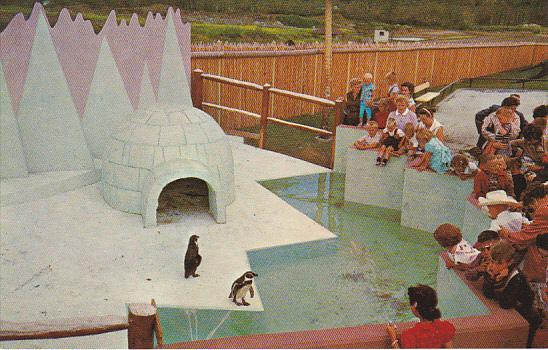 Canada Penguin's Igloo Childrens Zoo Storyland Valley Edmonton Alberta