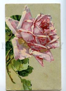 214873 Belle Pink ROSES by C. KLEIN Vintage Russian postcard