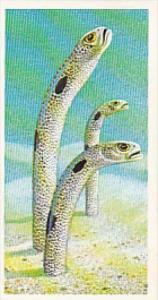 Brooke Bond Vintage Trade Card Incredible Creatures 1986 No 11 Garden Eels