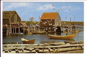 Gull Greetings, Fishing Wharf, Nova Scotia