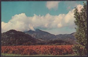 Mt St Helena,CA Postcard BIN