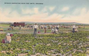 Spinach Harvesting on Farm near Fort Smith AR, Arkansas - pm 1943 - Linen