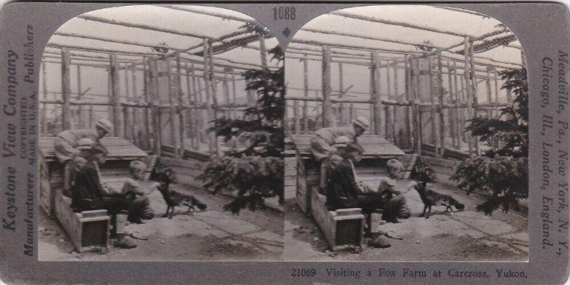 SV: Visiting a Fox Farm , CARCROSS , Yukon , Canada , 00-10s