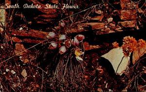 South Dakota State Flower The Pasque