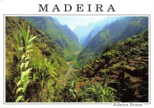 Postcard MADEIRA, Ribeira Brava, View of the Valley to the North of Village #878