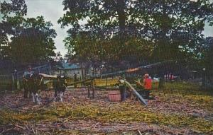 Missouri Gladden Sorghum Mill 1963