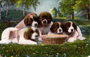 Cute Saint Bernard Puppies - with water dish - in 1906