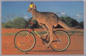 Kangaroo Bicycle Riding Swiftair Plane Advertising Australian Postcard