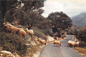 Lot 8 cyprus mountain scene cypriot shepherd sheep folklore types
