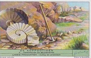 Liebig Vintage Trade Card 1947 Cephalopods S1456 No 6 Ammonieten En Belemnieten