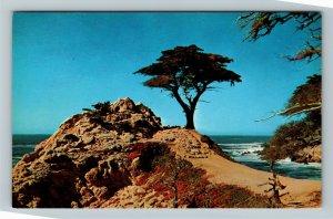 Caramel CA-California, Midway Point, Monterey Cypress, Bay, Chrome Postcard
