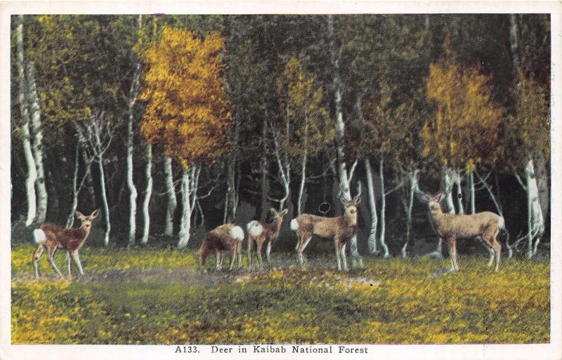 Kaibab National Forest Arizona~Mule Deer Grazing in Field by Birch Trees~1920s