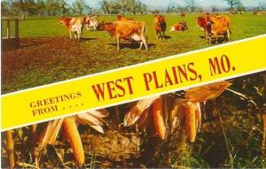 West Plains, Missouri Greetings From West Plains Cows and Corn Chrome Postcard
