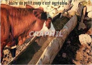 Postcard Modern Drink a Little Blow is Pleasant Cow