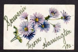 ME Souvenir from HARRINGTON MAINE Postcard PC Daisies