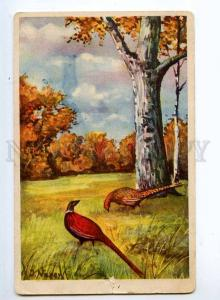 245420 Autumn HUNT pheasant Birds by NARER Vintage PC