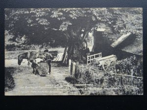 Wiltshire Figheldean THE SMITHY Blacksmith Under the Chestnut Tree Old Postcard