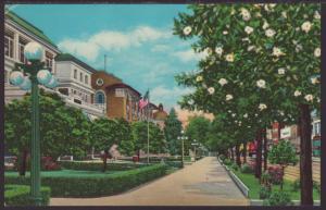 Bath House Row,Hot Springs,AR Postcard BIN