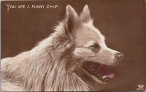 'You Are A  Funny Chap' Dog Canine Brown E.A. Schwerdtfeger c1912 Postcard E25