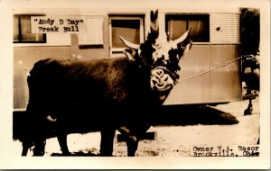 RPPC REAL PHOTO POSTCARD OHIO BROOKVILLE ANDY D DAY FREAK BULL OWNED BY W A RA