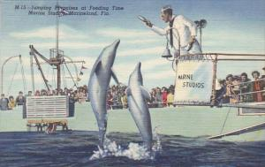 Jumping Porpoises At Feeding Time Marine Studios Marineland Florida Curteich