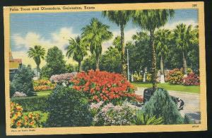 Galveston Texas Palm Trees and Oleanders 1946 Tichnor Linen Postcard