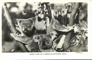 australia, Three Australian Native Bears, Koala (1940s) RPPC