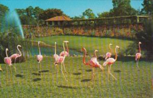 Birds Florida Flamingos Parrot Jungle Miami Florida