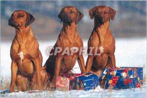 Modern Postcard Dogs