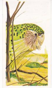 Trade Card Brooke Oxo Vanishing Wildlife No  35 Kakapo