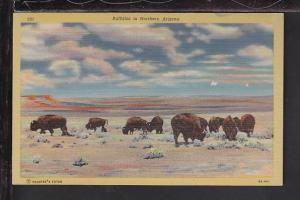 Buffaloes in Northern Arizona Postcard