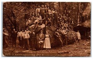 1912 A Washington Big Stick, Massive Felled Tree Postcard