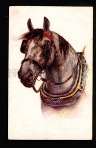 051225 Head of Nice HORSE w/ Blinders Vintage PC
