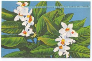 Orange Blossoms Florida Vintage Linen Postcard