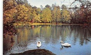 Swans Mirror Lake at Berry Academy Georgia, USA Unused