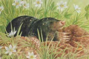 Mole Feeding On Earthworm & Slug Postcard
